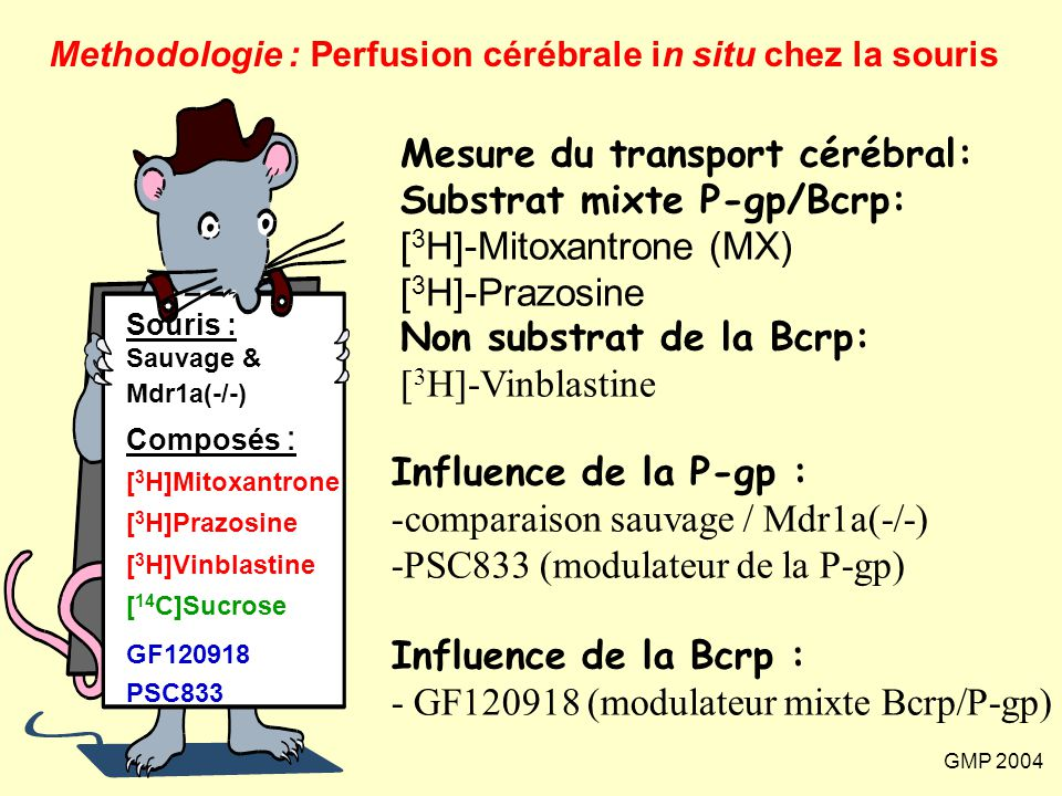 Mesure du transport cérébral: Substrat mixte P-gp/Bcrp: