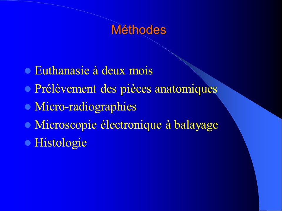 Méthodes Euthanasie à deux mois. Prélèvement des pièces anatomiques. Micro-radiographies. Microscopie électronique à balayage.