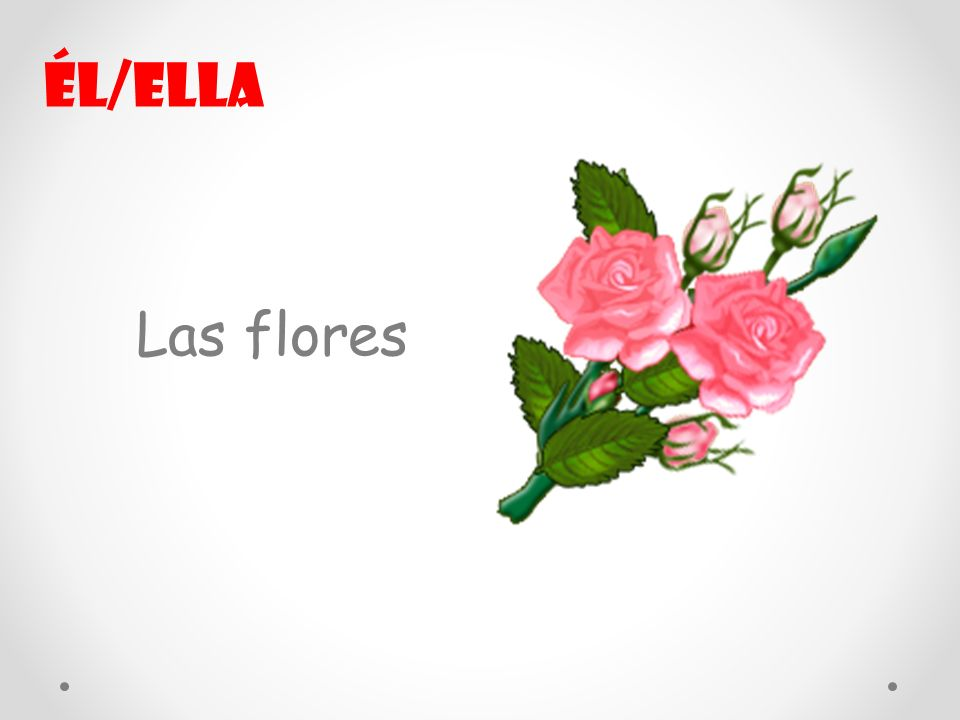 Él/ella Las flores