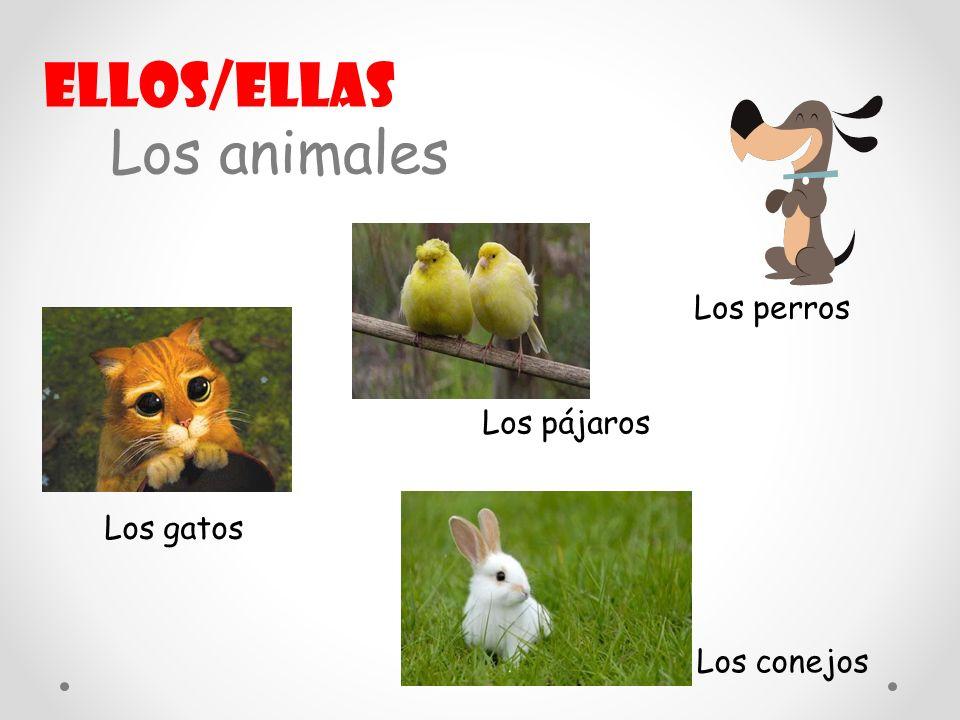 Ellos/ellas Los animales Los perros Los pájaros Los gatos Los conejos