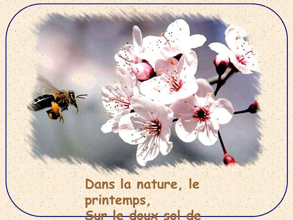 Dans la nature, le printemps,