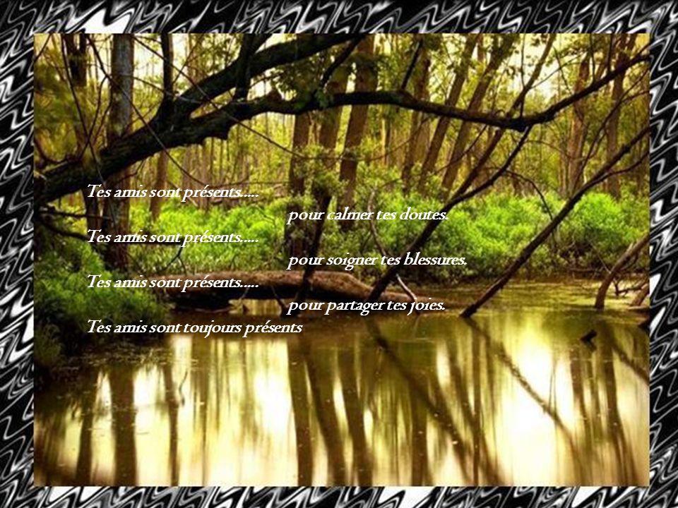 Tes amis sont présents..... pour calmer tes doutes. pour soigner tes blessures. pour partager tes joies.