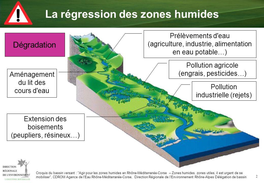 La régression des zones humides