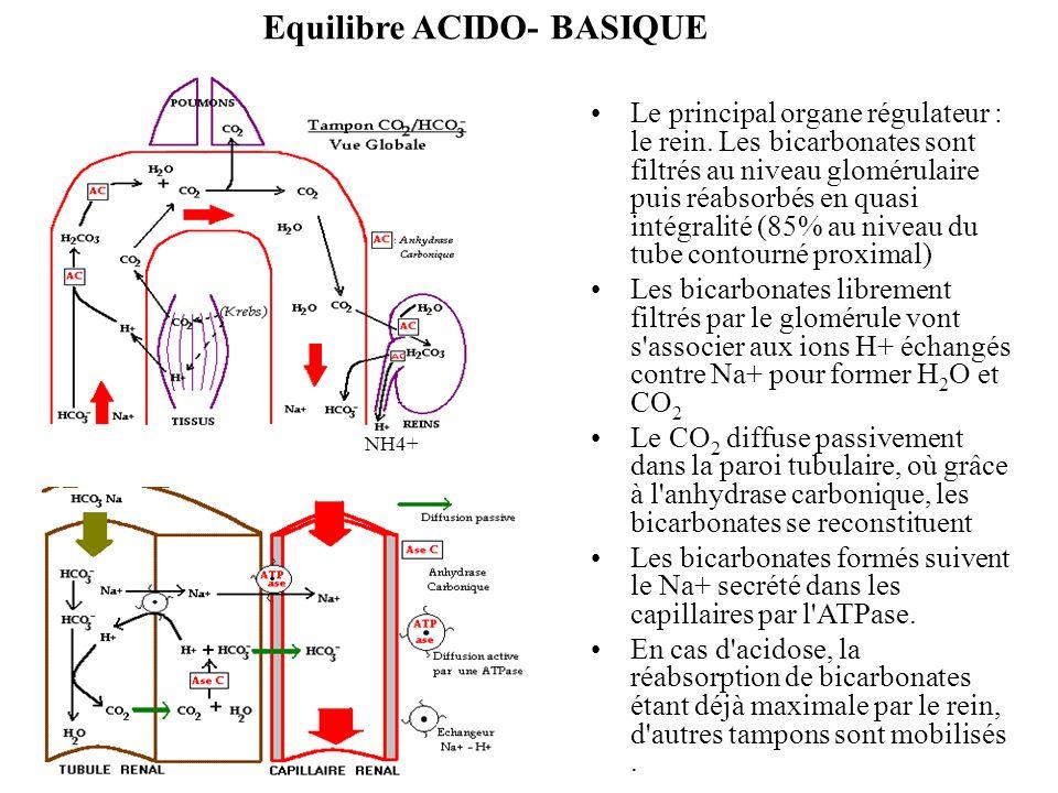 Equilibre ACIDO- BASIQUE