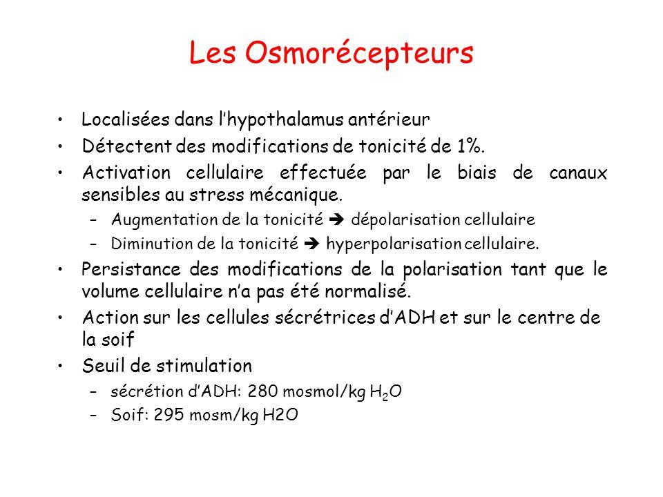 Les Osmorécepteurs Localisées dans l'hypothalamus antérieur