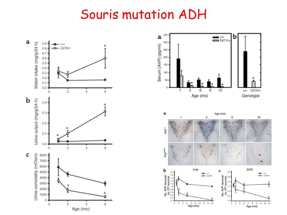 Souris mutation ADH