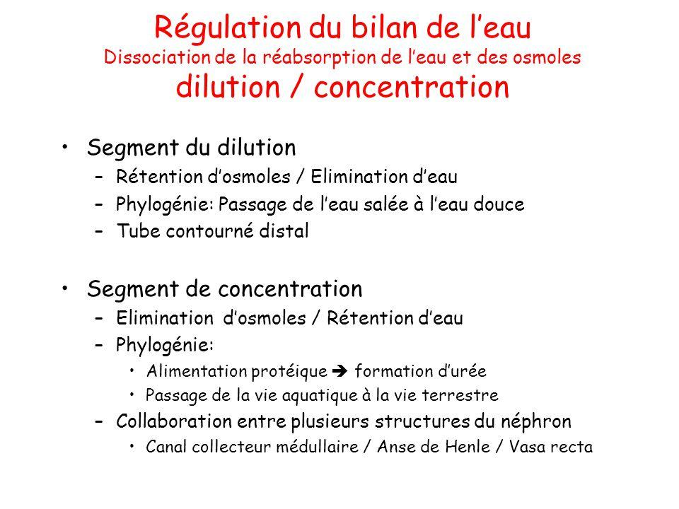 Régulation du bilan de l'eau Dissociation de la réabsorption de l'eau et des osmoles dilution / concentration