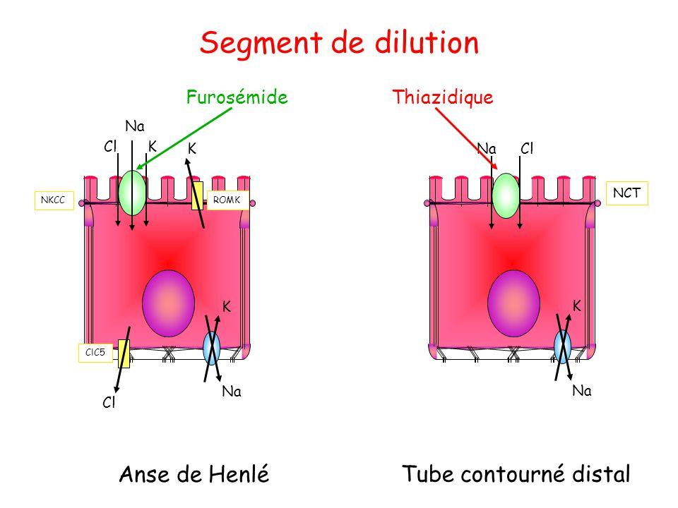 Segment de dilution Anse de Henlé Tube contourné distal Furosémide