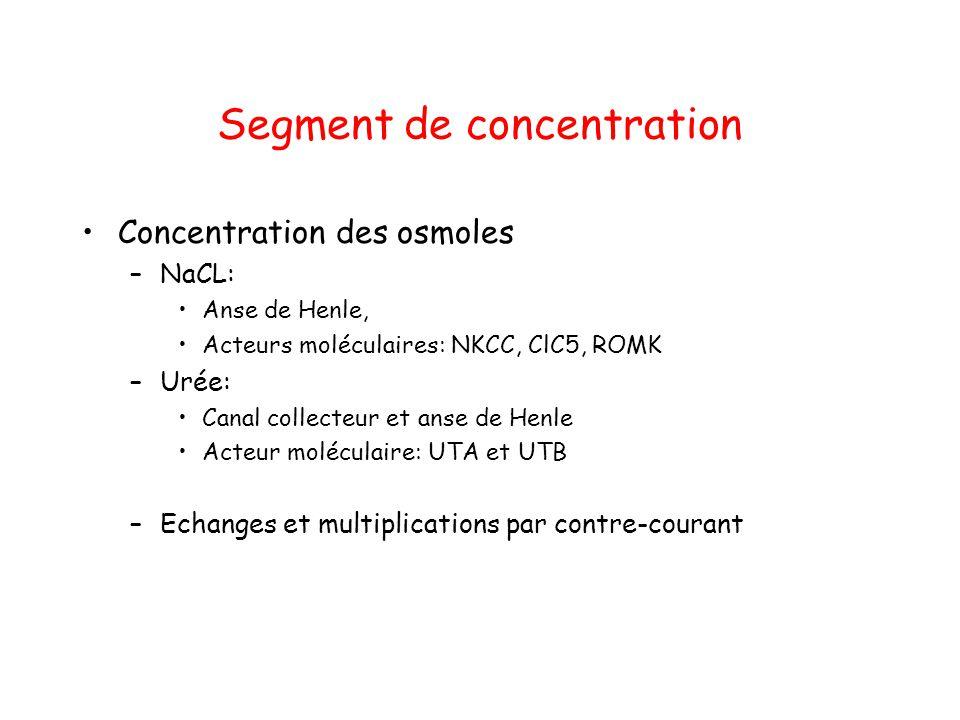 Segment de concentration
