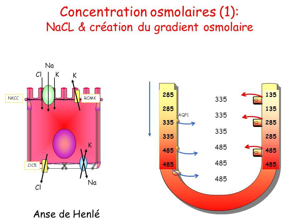 Concentration osmolaires (1): NaCL & création du gradient osmolaire