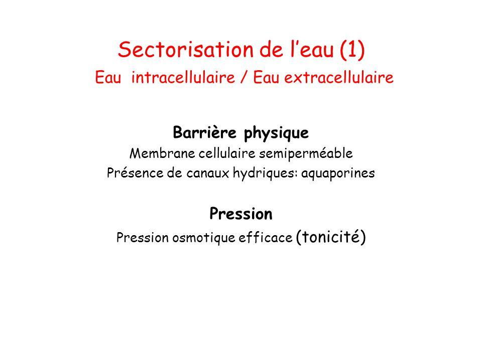 Sectorisation de l'eau (1) Eau intracellulaire / Eau extracellulaire