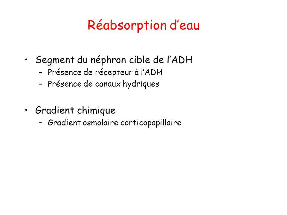 Réabsorption d'eau Segment du néphron cible de l'ADH Gradient chimique
