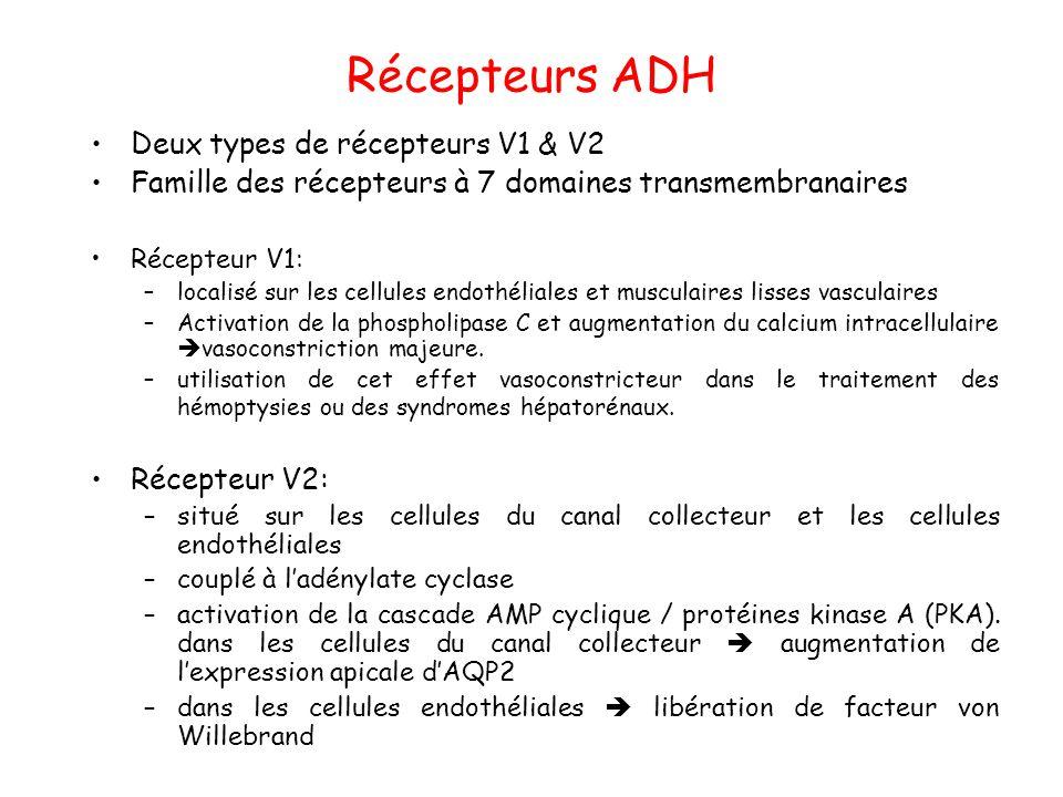 Récepteurs ADH Deux types de récepteurs V1 & V2
