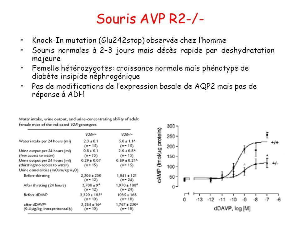 Souris AVP R2-/- Knock-In mutation (Glu242stop) observée chez l'homme
