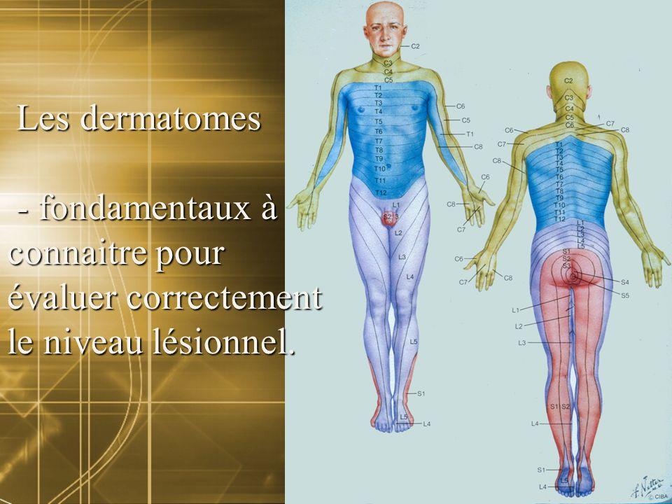 Les dermatomes - fondamentaux à connaitre pour évaluer correctement le niveau lésionnel.
