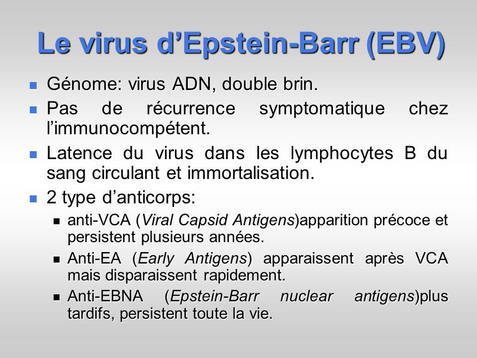 Le virus d'Epstein-Barr (EBV)