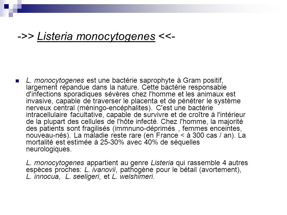 ->> Listeria monocytogenes <<-