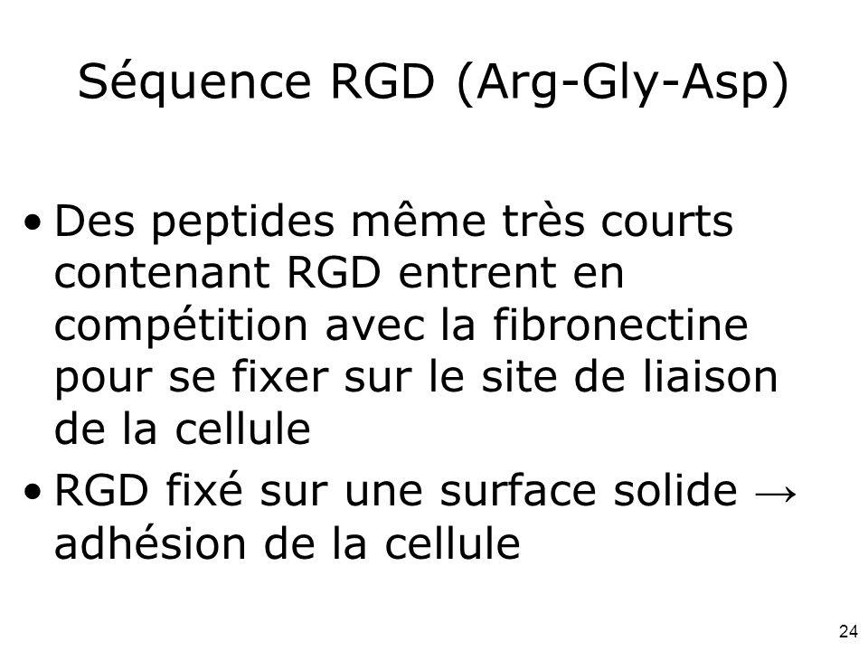Séquence RGD (Arg-Gly-Asp)