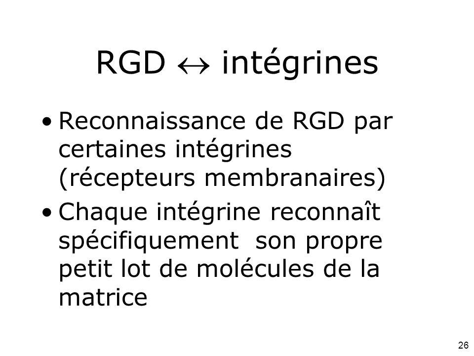 Mardi 12 février 2008 RGD  intégrines. Reconnaissance de RGD par certaines intégrines (récepteurs membranaires)