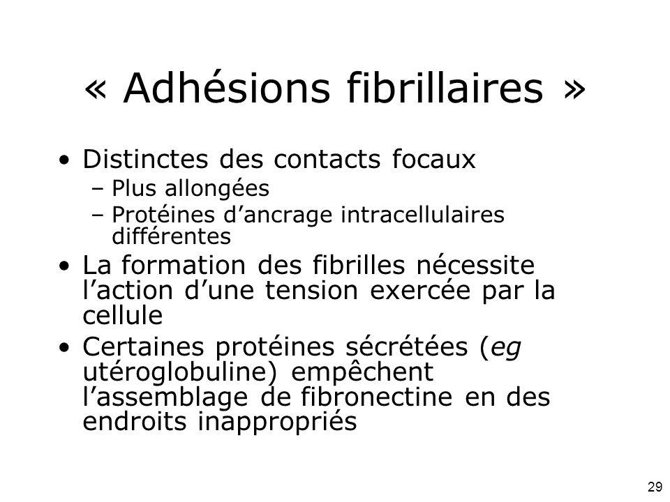 « Adhésions fibrillaires »