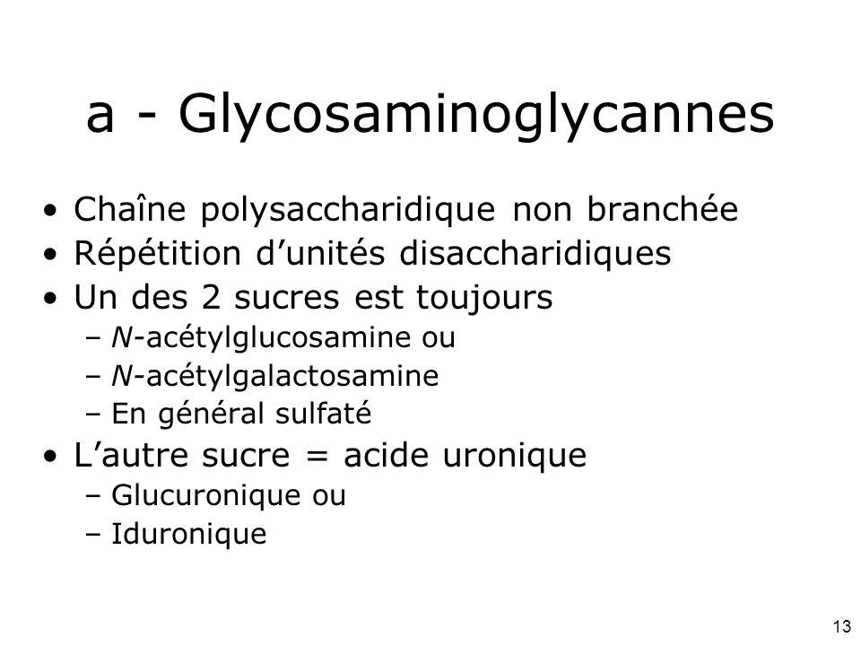 a - Glycosaminoglycannes