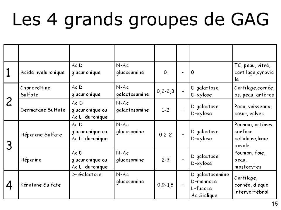 Les 4 grands groupes de GAG