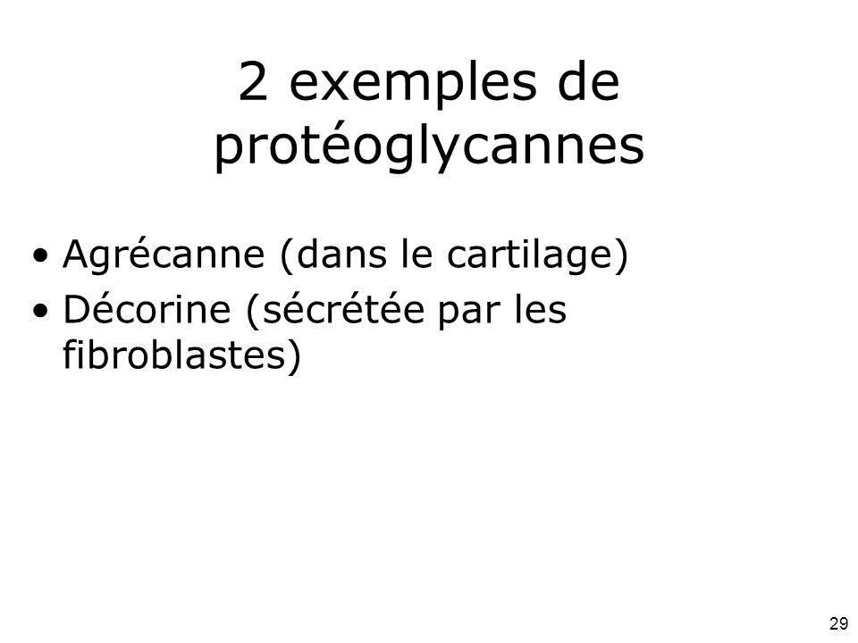 2 exemples de protéoglycannes