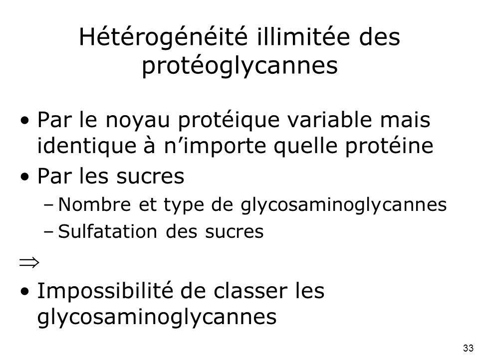 Hétérogénéité illimitée des protéoglycannes