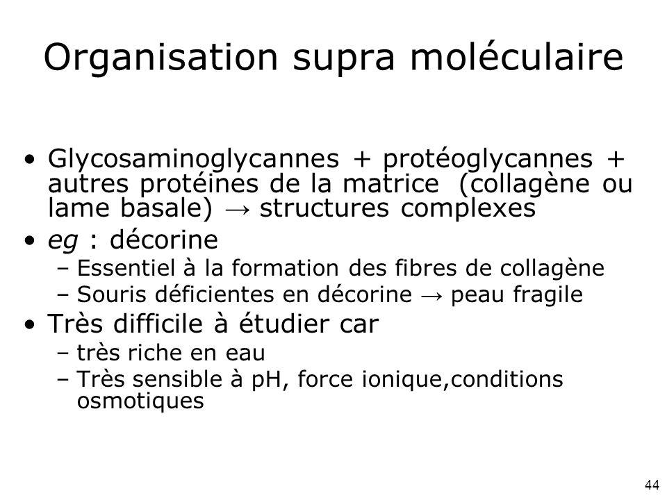 Organisation supra moléculaire