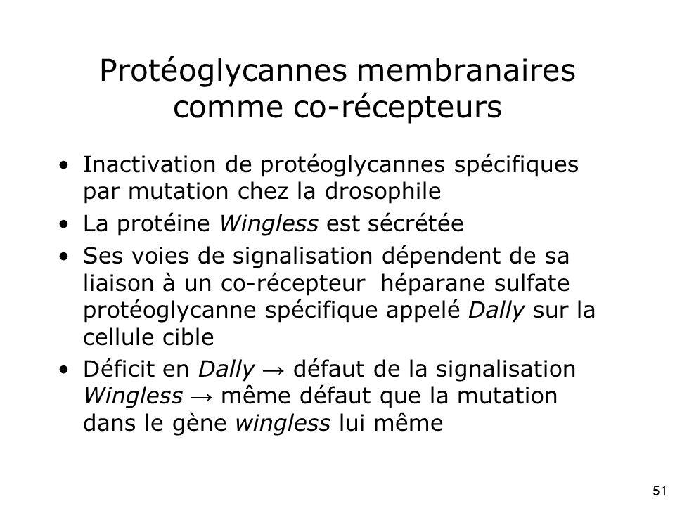 Protéoglycannes membranaires comme co-récepteurs