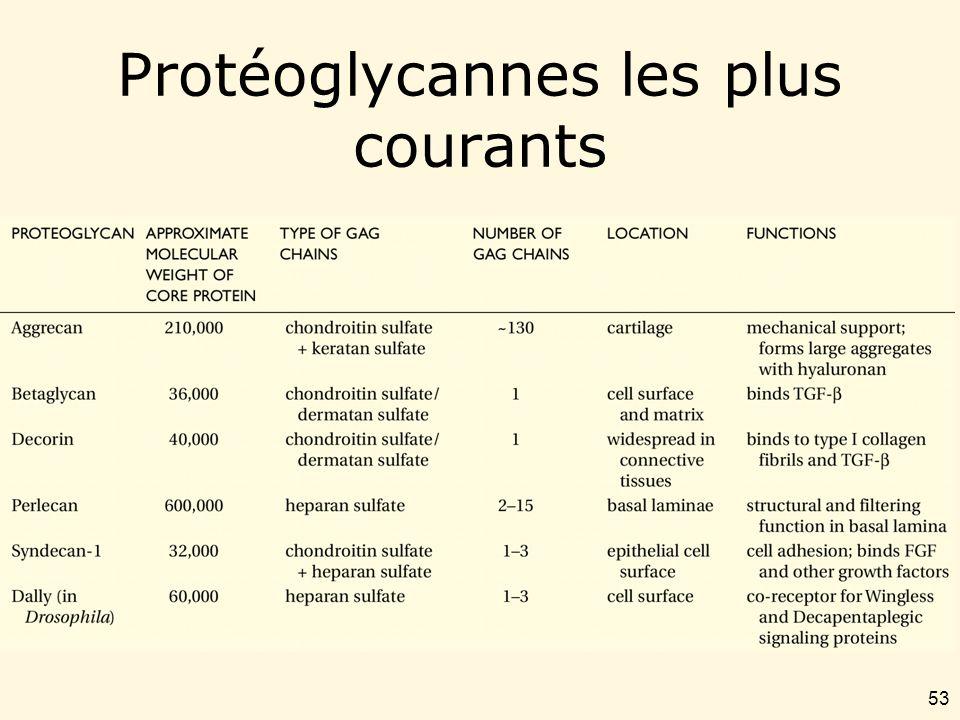 Protéoglycannes les plus courants