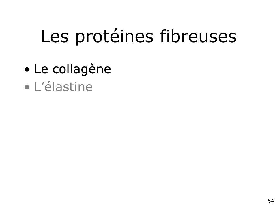 Les protéines fibreuses