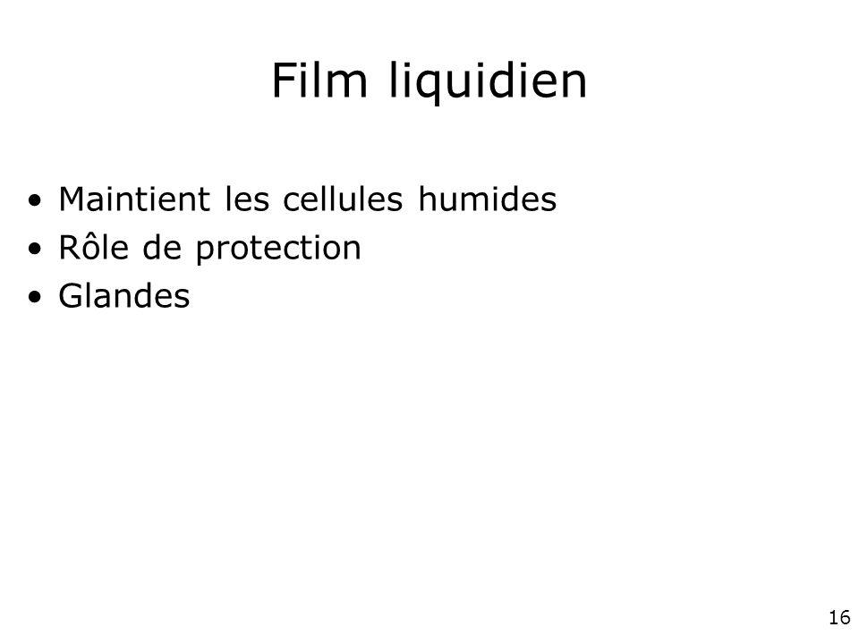 Film liquidien Maintient les cellules humides Rôle de protection
