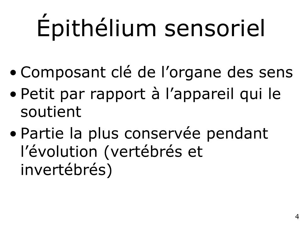 Épithélium sensoriel Composant clé de l'organe des sens