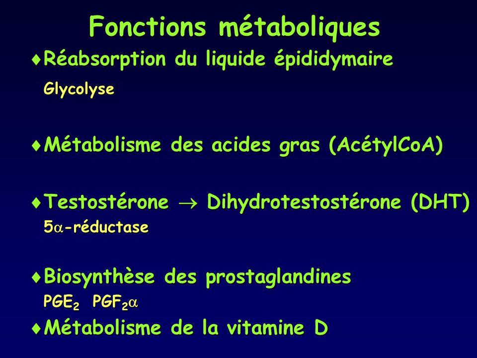 Fonctions métaboliques