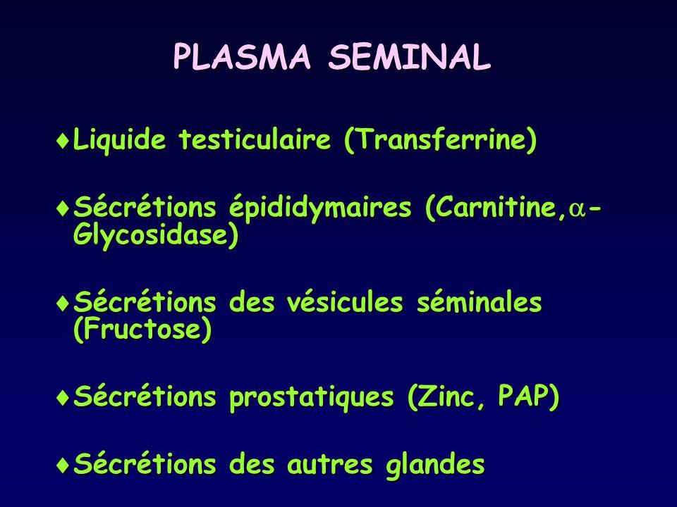 PLASMA SEMINAL Liquide testiculaire (Transferrine)