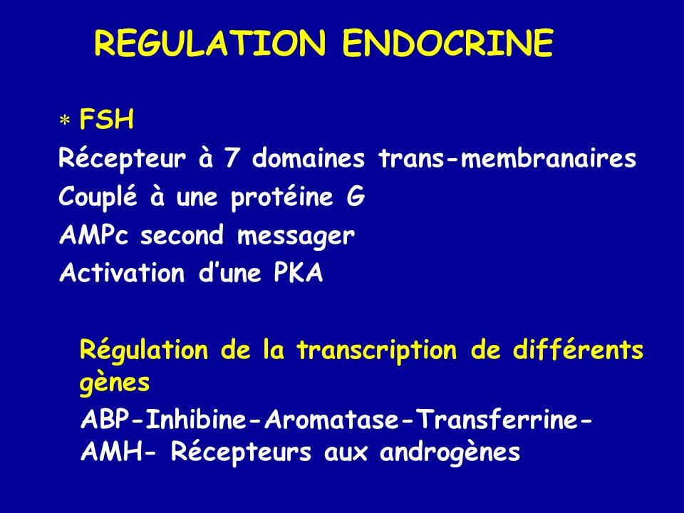 REGULATION ENDOCRINE FSH Récepteur à 7 domaines trans-membranaires