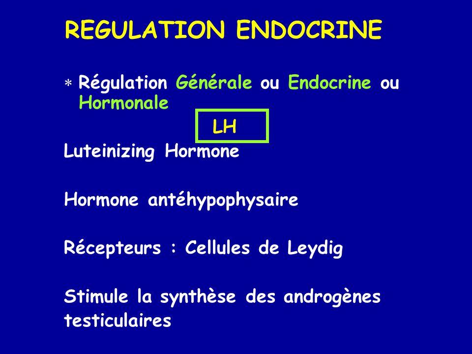 REGULATION ENDOCRINE Régulation Générale ou Endocrine ou Hormonale LH