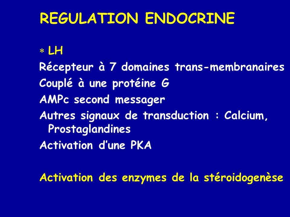 REGULATION ENDOCRINE LH Récepteur à 7 domaines trans-membranaires