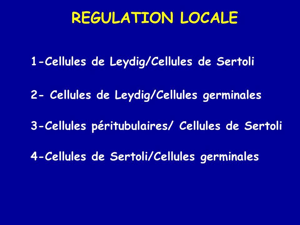 REGULATION LOCALE 1-Cellules de Leydig/Cellules de Sertoli