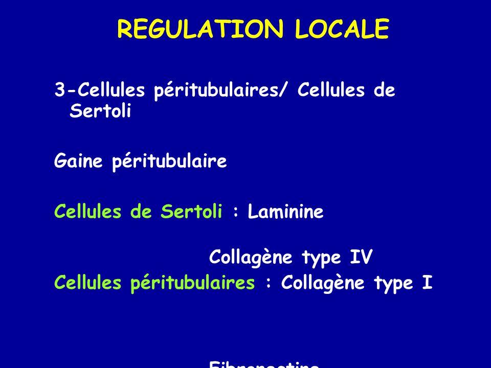 REGULATION LOCALE 3-Cellules péritubulaires/ Cellules de Sertoli