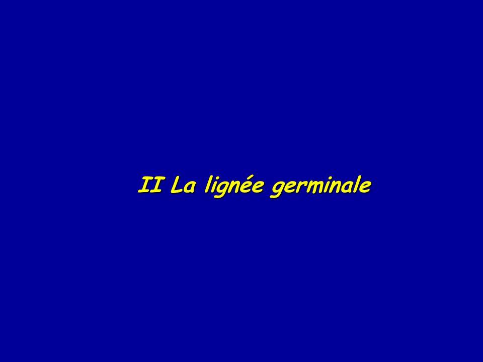 II La lignée germinale