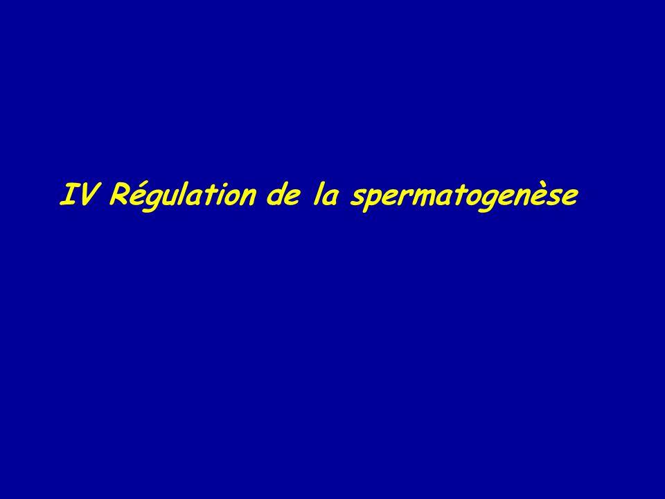 IV Régulation de la spermatogenèse