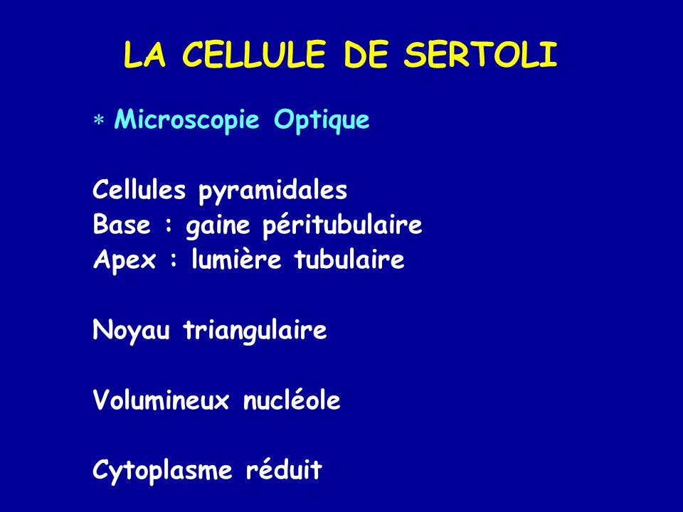 LA CELLULE DE SERTOLI Microscopie Optique Cellules pyramidales