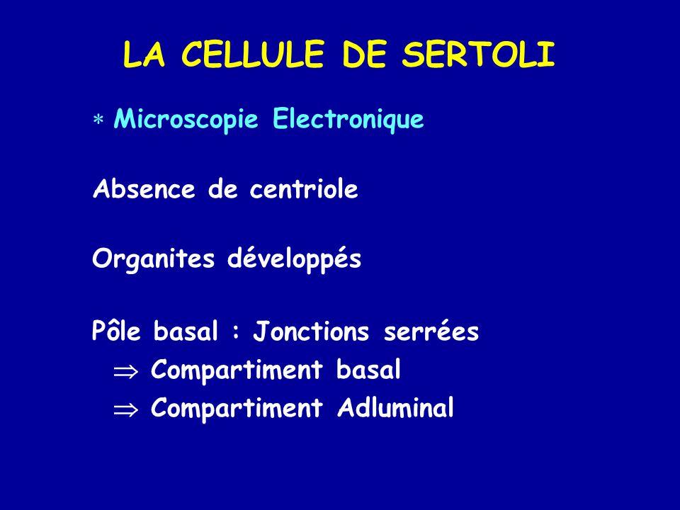 LA CELLULE DE SERTOLI Microscopie Electronique Absence de centriole