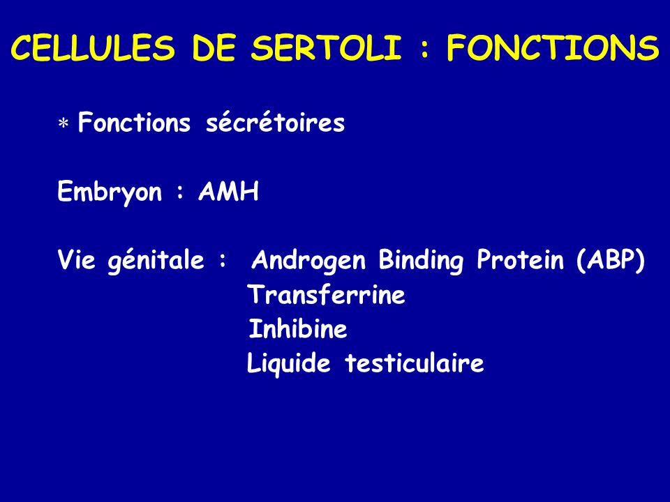 CELLULES DE SERTOLI : FONCTIONS