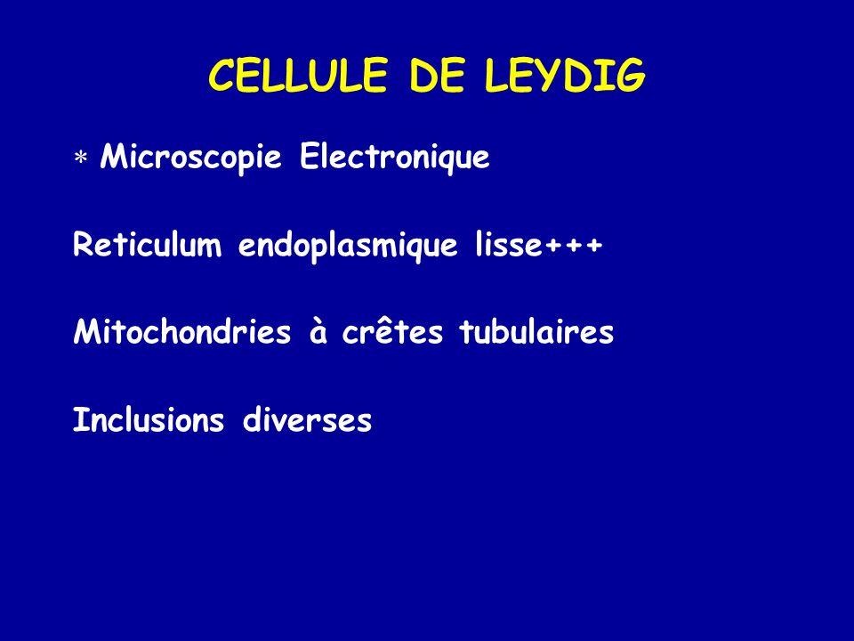 CELLULE DE LEYDIG Microscopie Electronique