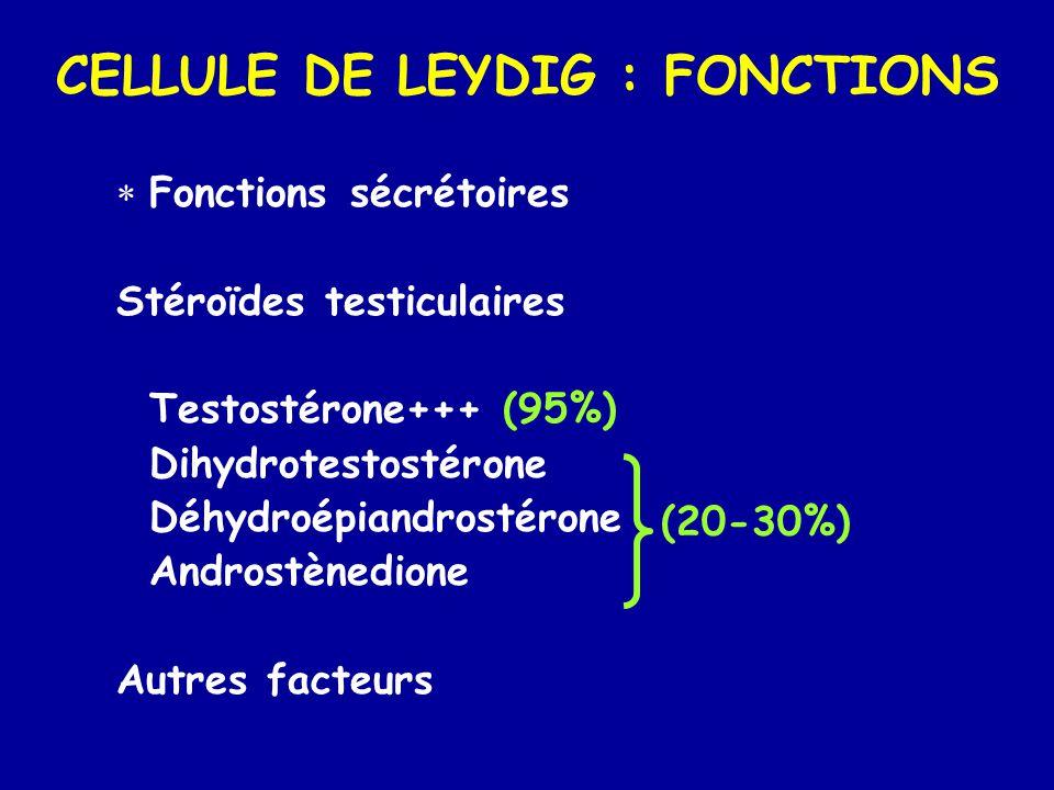 CELLULE DE LEYDIG : FONCTIONS