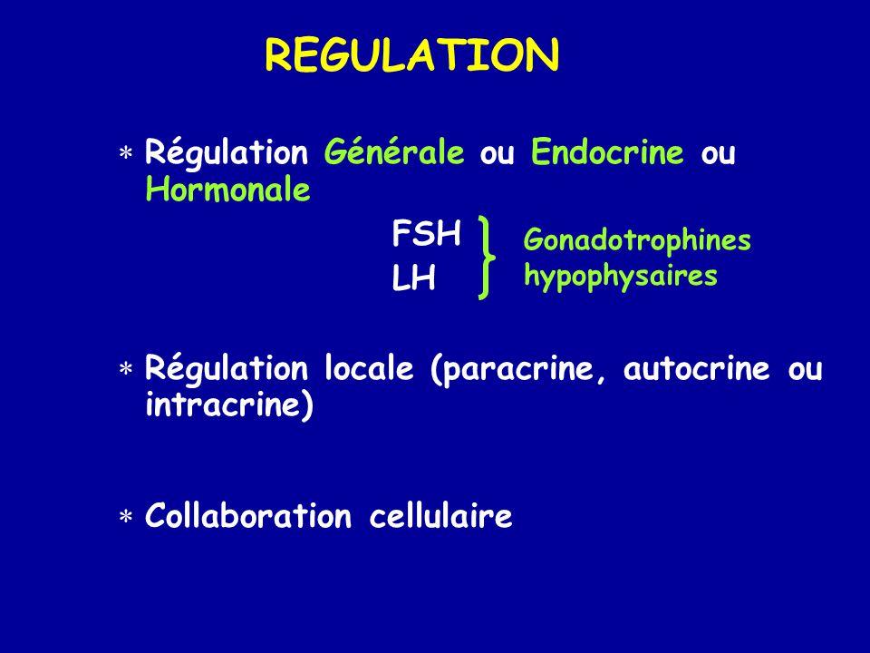 REGULATION Régulation Générale ou Endocrine ou Hormonale FSH LH