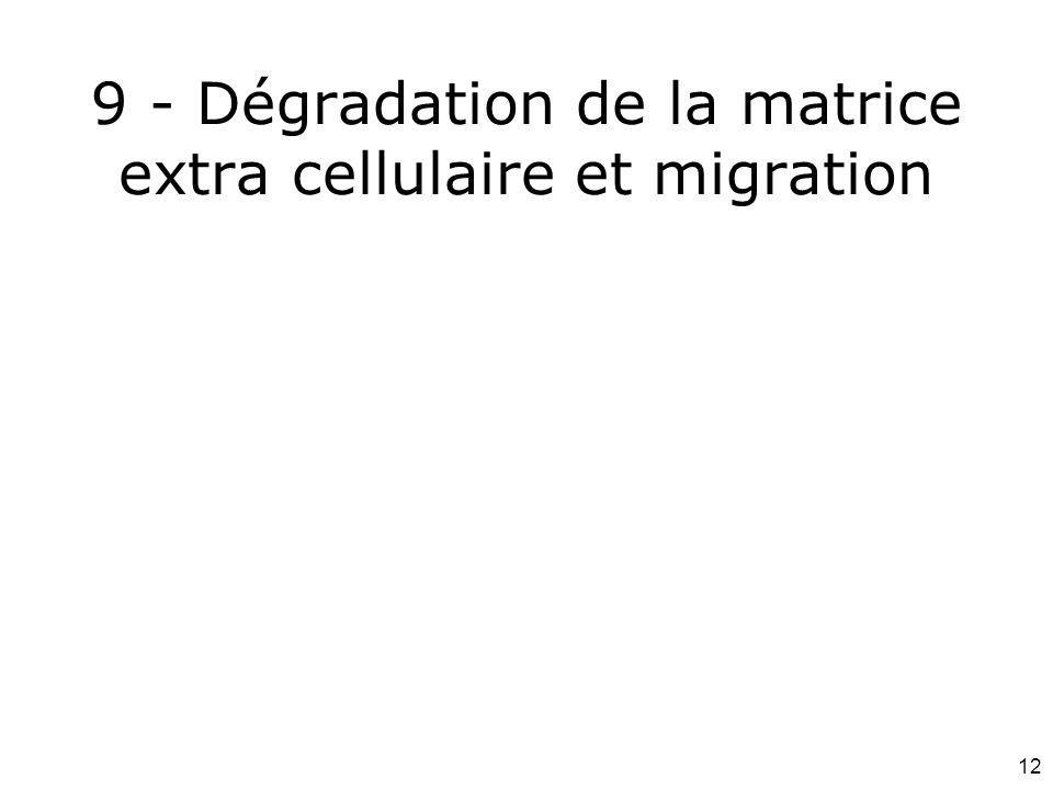 9 - Dégradation de la matrice extra cellulaire et migration